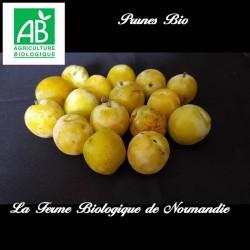 Délicieuses prunes bio sucrées, 1 kilo