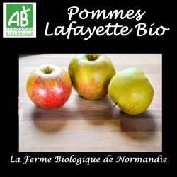 Pommes lafayette bio  500g