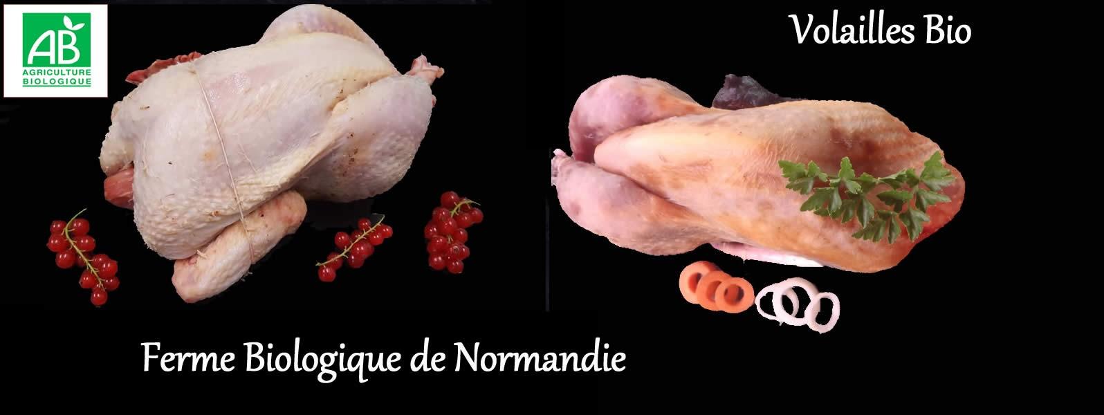 Volailles fermières bio, poulet, pintade, canard, dinde